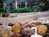 Swimming Pool with rocks
